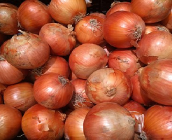 玉ねぎ もみじ 特徴 種 時期