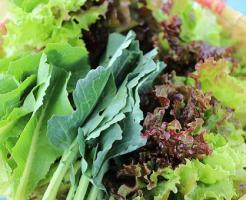 レタス サニーレタス 栄養価 食物繊維 比較