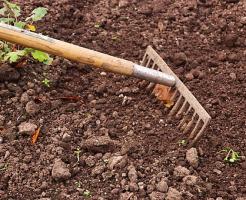 クレソン 栽培 肥料 土