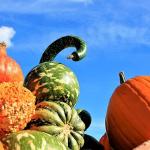 かぼちゃの保存方法!夏はどうしたら?