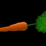 人参のカロリーは?炭水化物は?人参に含まれる酵素の働きとは!?