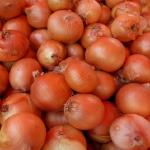 玉ねぎの生産量と消費量の日本一はどこの県?世界では?