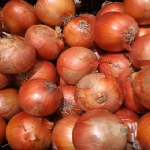玉ねぎの晩生品種「もみじ」の特徴とは?適している種植えの時期は?