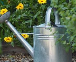 水菜 家庭菜園 間引き 方法 水やり 量