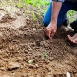 水菜の種の蒔き方と時期!種の採取方法は?
