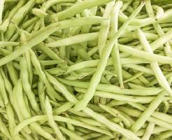 インゲン 栽培 方法