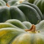 かぼちゃに含まれている栄養素!美容や葉酸について!