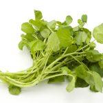 クレソンの茎!茎を使って栽培できる?