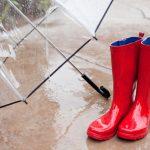 カボチャの受粉!雨対策について!