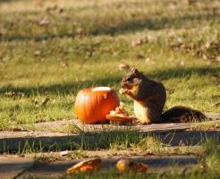 かぼちゃ 食べる 動物
