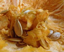 かぼちゃ 栄養 効果 皮 わた 加熱