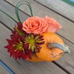 花屋さんに置いてあるオレンジ色のかぼちゃ!品種や名前は?