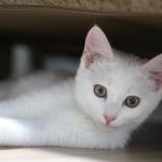 猫がきゅうりを見ると驚く理由は?猫がきゅうりを食べても大丈夫?
