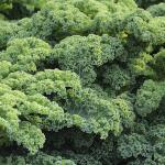緑黄色野菜の王様!ケールの葉酸含有量はどのくらい?