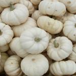 かぼちゃの白いのや甘いの!品種は何と言うの?