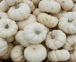 かぼちゃ 白い 甘い 品種