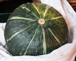 かぼちゃ 冬 栽培 なぜ
