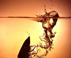 きゅうり 水 浮く 理由