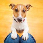 犬はかぼちゃを食べられる?どんな効果が期待できる?