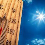 オクラの枯れる原因は温度にある?伸びない時には素早い対策を!