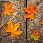 かぼちゃは秋の季語!知っていましたか?