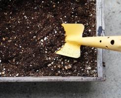 春菊 プランター 日当たり 間引き 土 深さ 伸びない