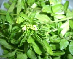 クレソン 茎 根 食べ方 栄養