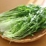 しなしなの水菜を復活させる方法は?水菜をシャキシャキのまま長持ちさせる方法は?