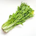 水菜の保存方法は?水菜を下ごしらえしてから冷凍保存する方法!
