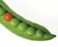 グリンピース カロリー 揚げ おつまみ 卵とじ 揚げ豆