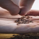 水菜の収穫後の家庭菜園のお手入れの方法は?種子の保存方法について!