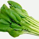 小松菜の品種!比較してみた!