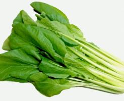 小松菜 品種 比較