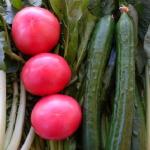 葉酸を摂りたい!小松菜とほうれん草の違いは?見分け方は?