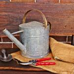 肥料袋を使ったごぼうの栽培方法とは?家庭菜園でごぼうが作れるのか?