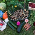 インゲンの栽培!一緒に栽培すると相性の良い野菜は?悪い野菜は?