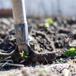 ゴーヤ栽培で欠かせない土の再生利用方法とは?始める前に処分方法を知ろう!