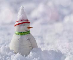 セロリ 栽培 越冬