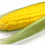 トウモロコシが主食!?どこの国で主食として食べられているの?