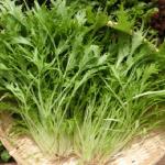 水菜の上手な栽培方法は?青虫の駆除方法と対策は?