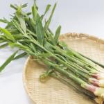 葉生姜のおいしい食べ方って?食べる以外に使い道はあるの?