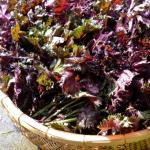 しそを乾燥保存するには天日が良い?乾燥しその作り方と栄養について!