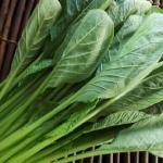 小松菜を長持ちさせる保存方法は?