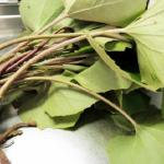 ふきの葉の栄養価と食べ方とは?日持ちする調理方法もご紹介!