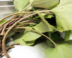 ふき 葉 日持ち 栄養 食べ方