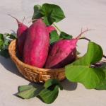 さつまいもの茎の下処理は?その栄養と保存方法について!