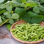 枝豆の鮮度の見分け方!腐ると臭いで分かる?