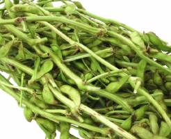 枝豆 枝つき 価格 取り方 鮮度