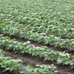 枝豆に与える肥料!種類や量は?価格とは?肥料がいらないって本当?