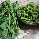 枝豆の保存とは?調理の方法について!